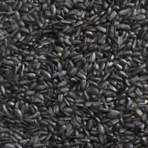 Henry's Black sunflower seeds 20kg for sale Evesham and online. We can deliver.